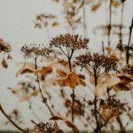 Wat je moet weten over een Olijfboompje